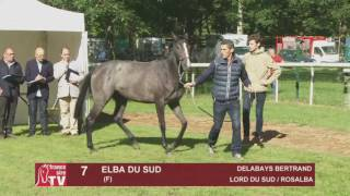 The Chaser Day Paray - 2016 - Lot 7 : Elba Du Sud
