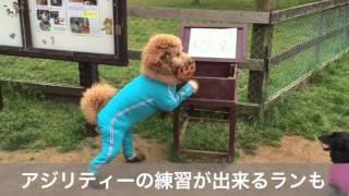 前か行きたかった成田ゆめ牧場に愛犬ユメと行ってきました。 初めて見る...