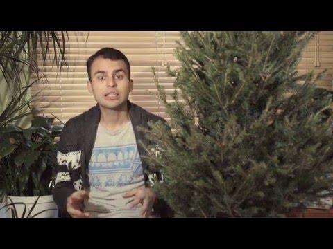 Jak dbać o swoją żywą świąteczną choinkę