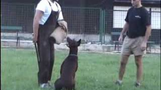 Ivan Jelavic Dog Training - Ali, Protect & Attack 2