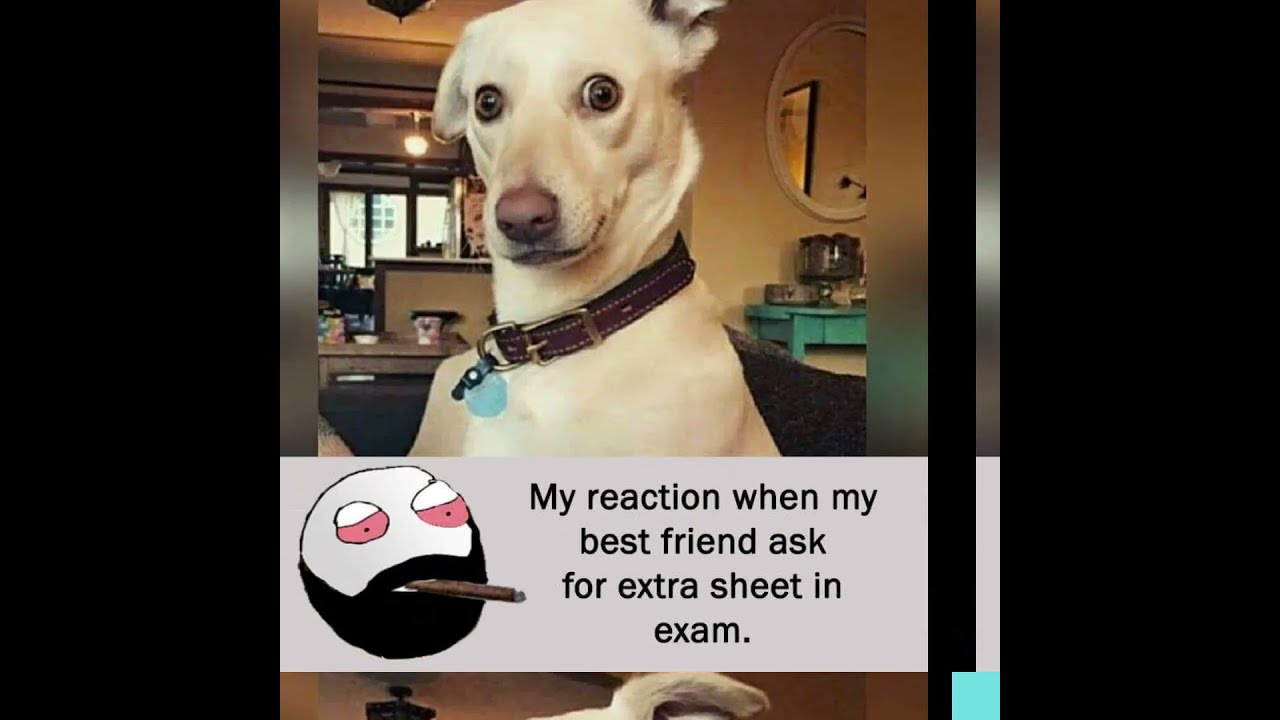 Funny memes that make you laugh || Meme Popcorn #memepopcorn #shorts(3)