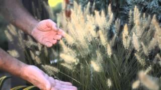 Winter Garden Tips : Fall & Winter Gardening Tips
