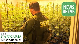 Large Outdoor Facility Leads to 5 Arrests in San Bernardino County and 19,000 Plants Confiscated