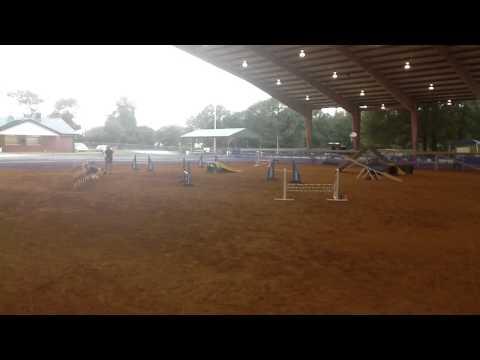 AKC B match in Columbia, SC