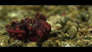 Critters of the Lembeh Strait | October 2019 Highlights