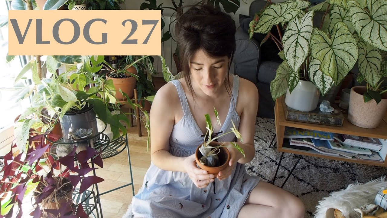 Jardinage (Syngonium Variegata & Caladiums) + une nouvelle plantagère - VLOG 27