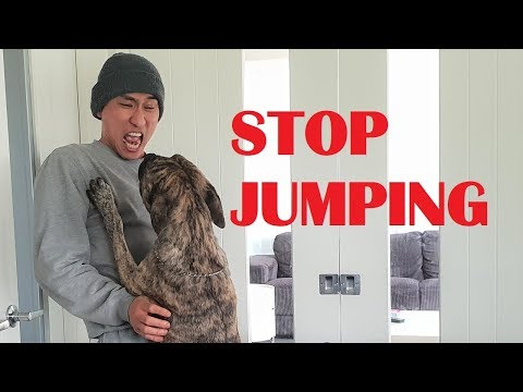 Jumping dog video | FunnyDog.TV