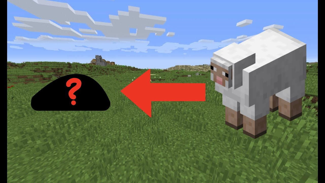 What do SHEEP eat in Minecraft - YouTube