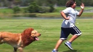 مقلب مضحك كلب متنكر على شكل اسد ! شاهد ردة فعل الناس 2016