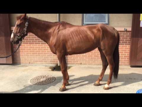 Equine motor neuron disease youtube for Equine motor neuron disease in horses