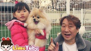 라임이와 뽀뽀가 함께하는 유기동물 없는 행복한 가족 만들기 | 강아지 OX 퀴즈 대결!