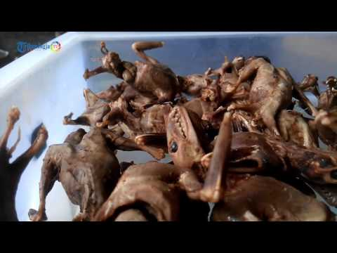 Kuliner Extreme Tongseng Emprit dan Codot Bantul