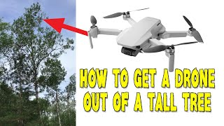 How To Get a Stuck Drone Out of a Tall Tree
