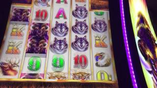Buffalo Grand Slot Machine Bonus Game(, 2016-07-13T03:59:15.000Z)