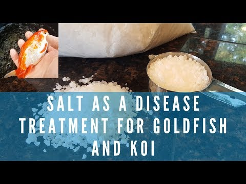 Using Salt As A Disease Treatment For Koi And Goldfish