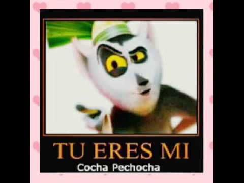 Pechocha in english