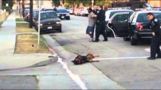 mix▶ Police Shoot Rottweiler Dog in Hawthorne, California after arresting the owner