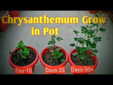विभिन्न तरह की मिट्टी की पहिचान करना || Soil for Garden || Home garden