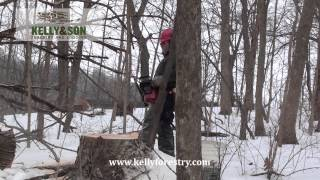 Kelly & Son Forestry and Logging - It's What We Do - Big Timber Falling