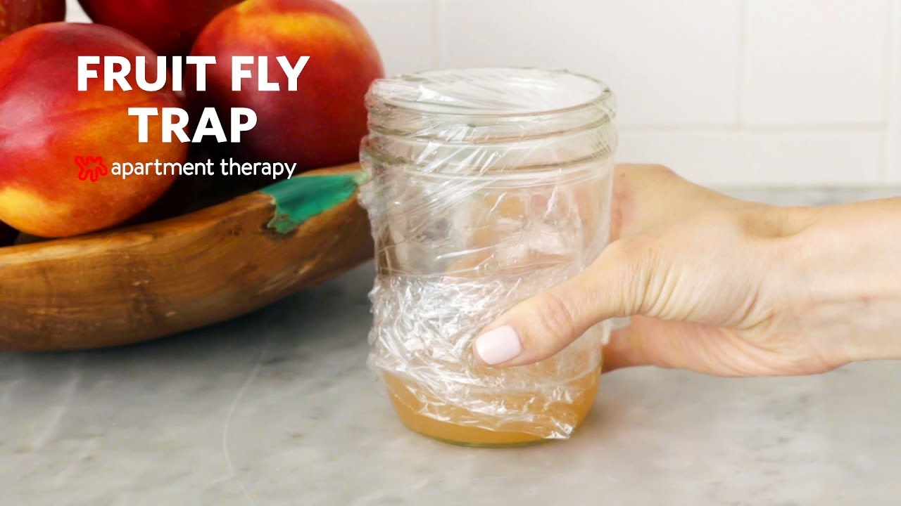 How to Make a Homemade Fruit Fly Trap | Apartment Therapy