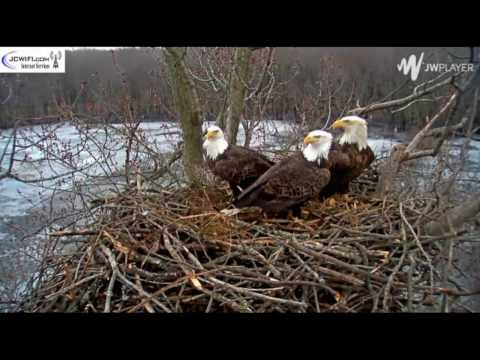 Stewards of the Upper Mississippi River Refuge (SUMRR) 1.26.17 An Introduction to the Trio Nest