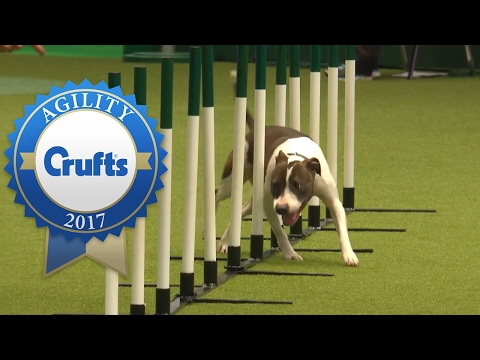 Agility - Crufts Team Medium Final (Part 1) | Crufts 2017