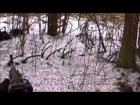 Медвежья шкура-1