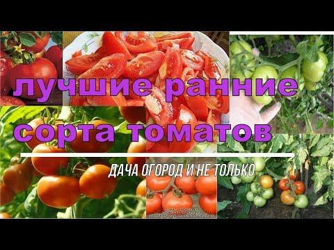 Сорта Томатов для Теплиц! ЛУЧШИЕ СОРТА РАННИХ ТОМАТОВ🍅МЯСИСТЫХ. Выбираем семена помидор на 2020 год | урожайные | посадить | томатов | помидор | томаты | сортов | ранних | лучшие | сорта | обзор
