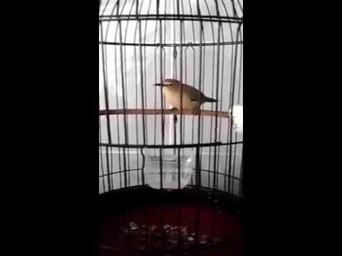 Pleci Langsung Gacor - YouTube 9a5e55cbd5