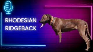 Episode 103: Rhodesian Ridgeback  Daman Munk  Deep Creek Ridgeback's