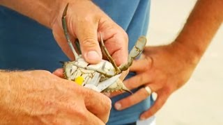 How to Bait a Blue Crab