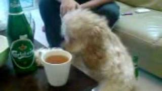 Susan Khanoom(puppy Drinks Beer)