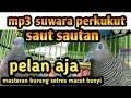 Suwara Perkutut Lokal Untuk Terapi Burung Setres Macet Bunyi  Mp3 - Mp4 Download