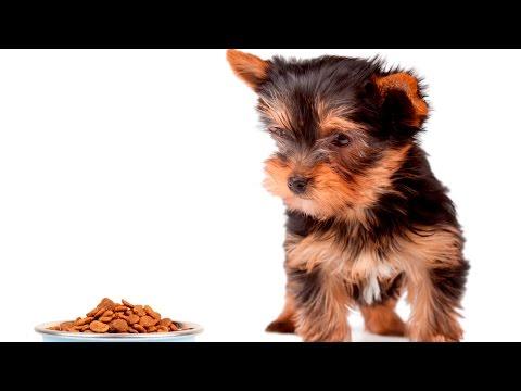 Adestramento de Cães - Desmame