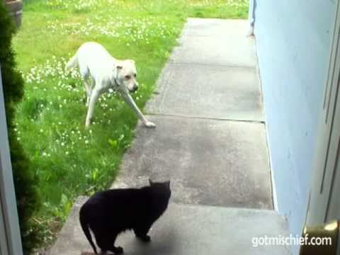 are cats good companions