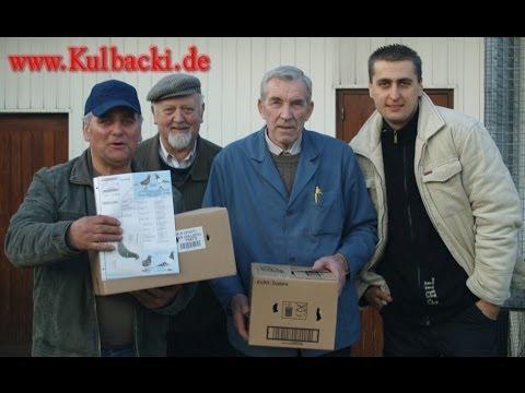 Belgien Arendonk Karel Meulemans Tauben (Männchen) , Kulbacki Germany Wir Züchten Nur Aus Originalen