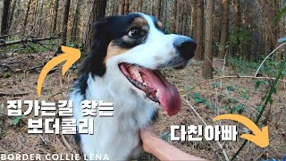 Border Collie dog helping injured dad to find the way back home  [2.7K]