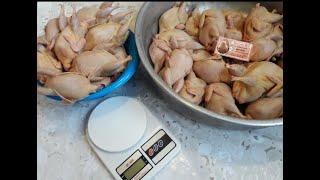 Цена перелиного мяса, инкубяйца. Разделка и очистка перепела