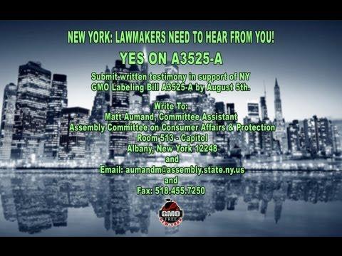 New York GMO Labeling Bill A3525-A Public Hearing