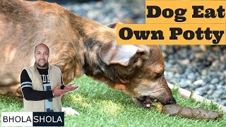 Health Problem - Dog Eat Potty - Bhola shola
