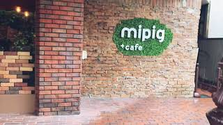 【Travel】Pet cafe experience...with mini piggies!
