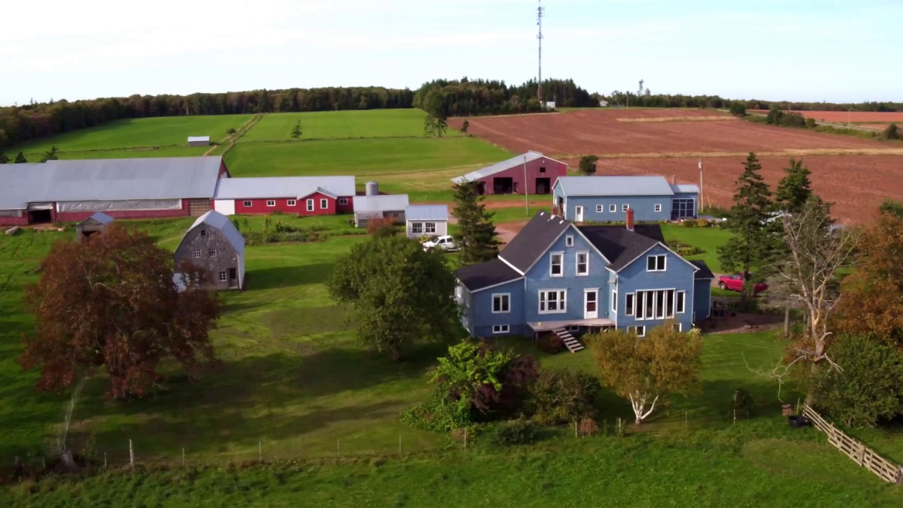 Dairy Farm for Sale - PEI, Canada - YouTube for Canadian Dairy Farms  51ane