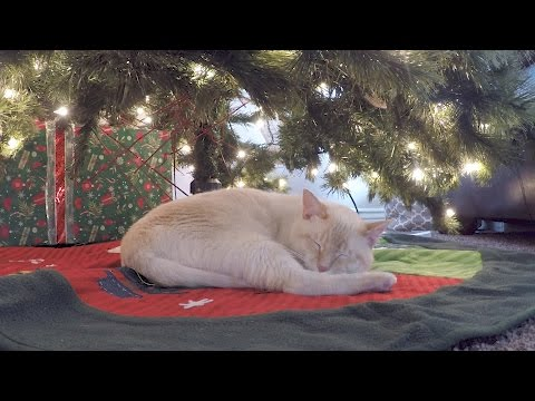 MY NEW THING - Cat Under The Christmas Tree