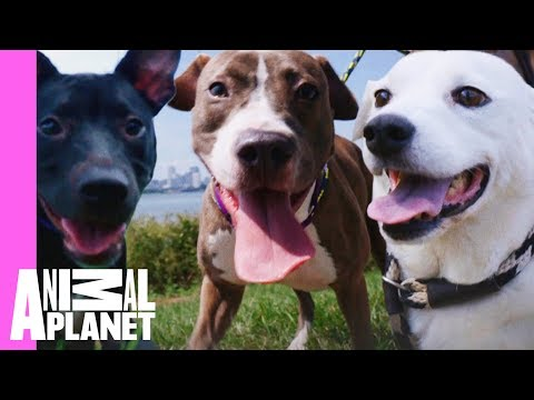 Five Insanely Cute Dog Moments From Pit Bulls & Parolees | Pit Bulls & Parolees