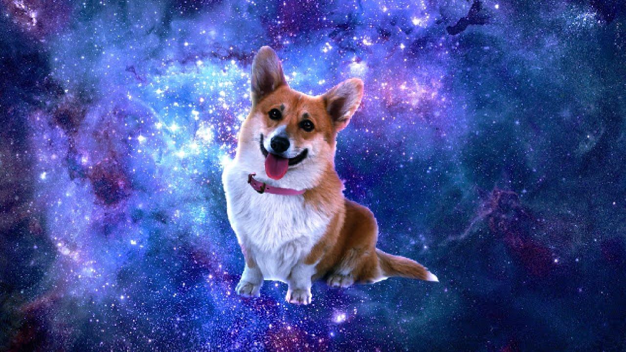 Shooting Stars - Dog Meme Edition - YouTube