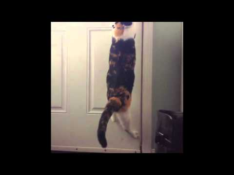 CRAZY CAT ESCAPES LOCKED DOOR OF HOUSE!!!!!!!