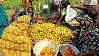 200 KG Tomato Pickles Cooking For Kids & Villagers - Tasty Spice Tomato Chutney Prepared By Women