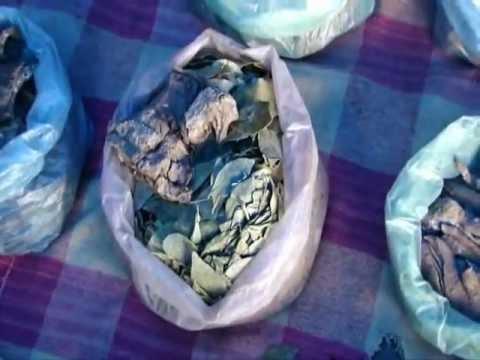 Octonary Ingredients of Euphorbia hirta Formulations: Pankaj Oudhia