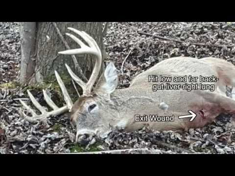 Michigan Buck Self Video:  Adapting To Changing Conditions On A Small Property