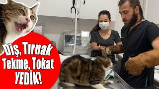 INSANE CAT ATTACK! NINJA CAT TRIES TO ESCAPE FROM VET! #inanoğlu #catattack